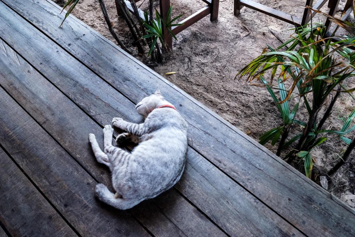 Cat in Koh Yao Yai