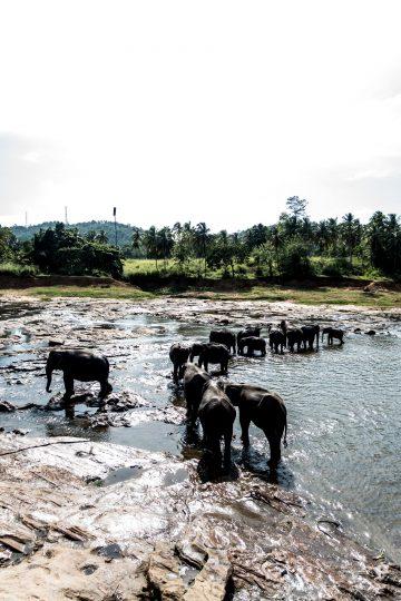 Elefanten im See