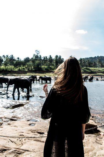 Warum ich nie wieder in ein Elefanten Waisenhaus fahren würde