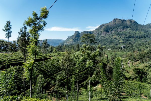 Sri_Lanka_Travel_Guide-4