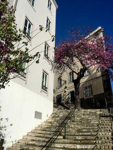 24_7_Portugal-11