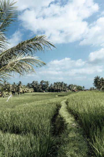 Wo findet man Reisterrassen in Bali