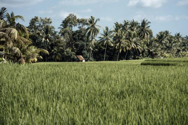 Whaelse_Fashionblog_Berlin_Bali_rice_terraces-11