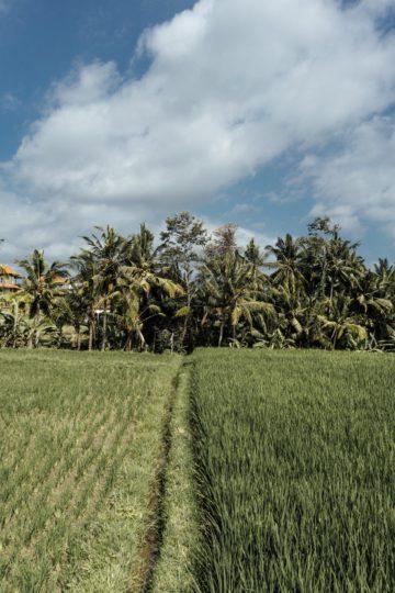 Whaelse_Fashionblog_Berlin_Bali_rice_terraces-14