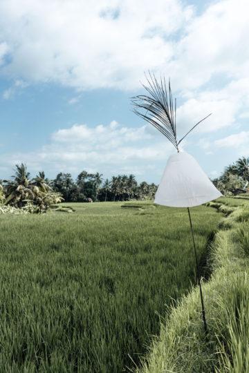 Die schönsten Reisterrassen Bali