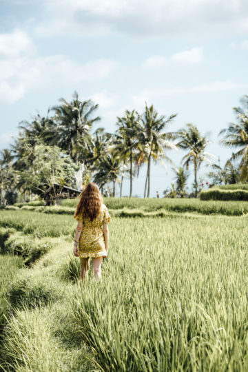 Where to find rice terraces in Bali