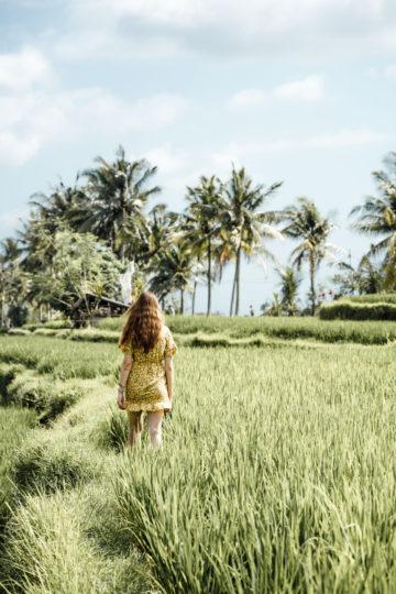 Wo ihr in Bali Reisterrassen findet