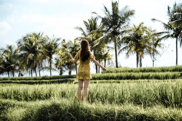 Reisterrassen in Ubud