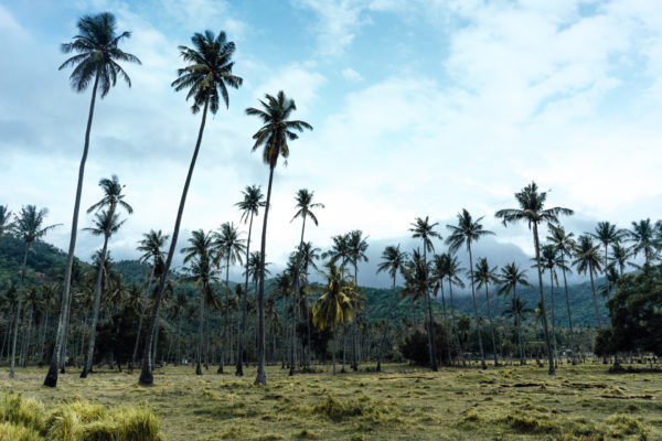 Whaelse_Fashionblog_Berlin_Lombok_Palm_Tree_Fields-16