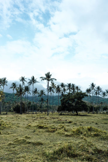 Whaelse_Fashionblog_Berlin_Lombok_Palm_Tree_Fields-18
