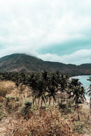 view of palm tree fields in Lombok