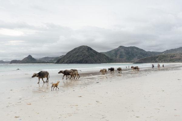 Selong Belanak beach in Lombok